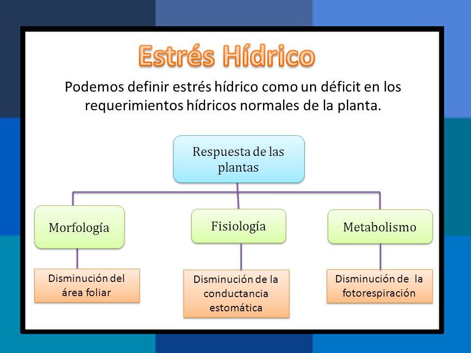 Estrés Hídrico Podemos definir estrés hídrico como un déficit en los requerimientos hídricos normales de la planta.
