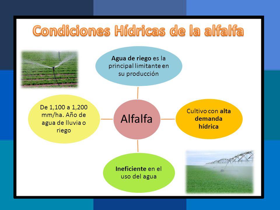 Condiciones Hídricas de la alfalfa