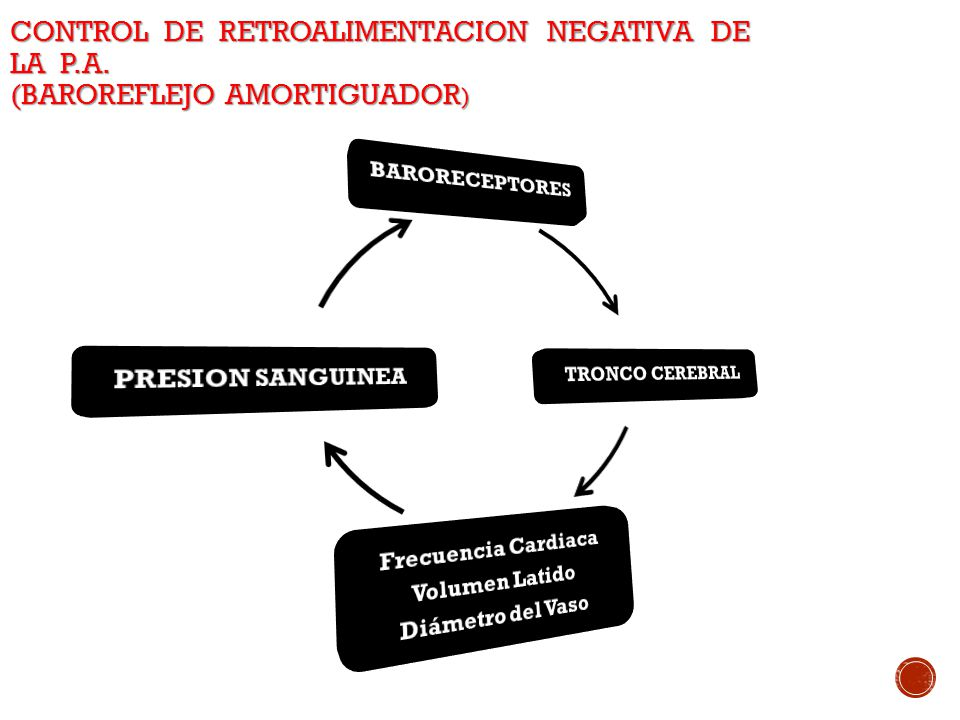 CONTROL DE RETROALIMENTACION NEGATIVA DE LA P. A