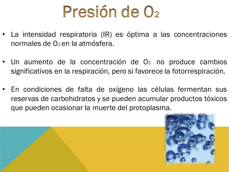 Presión de O2 La intensidad respiratoria (IR) es óptima a las concentraciones normales de O2 en la atmósfera.