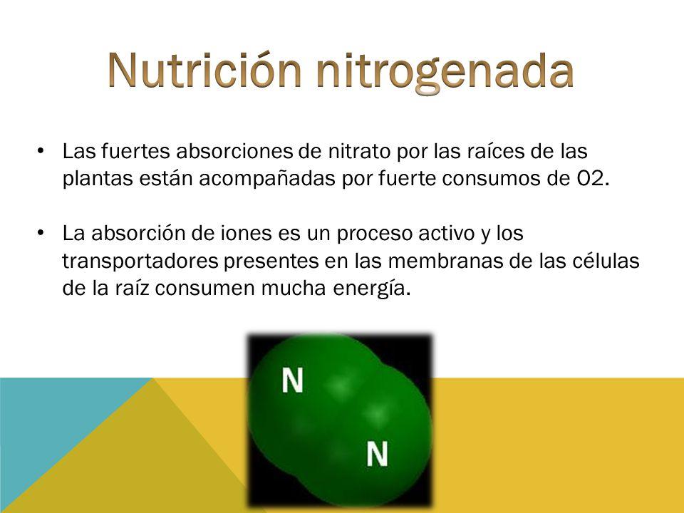 Nutrición nitrogenada