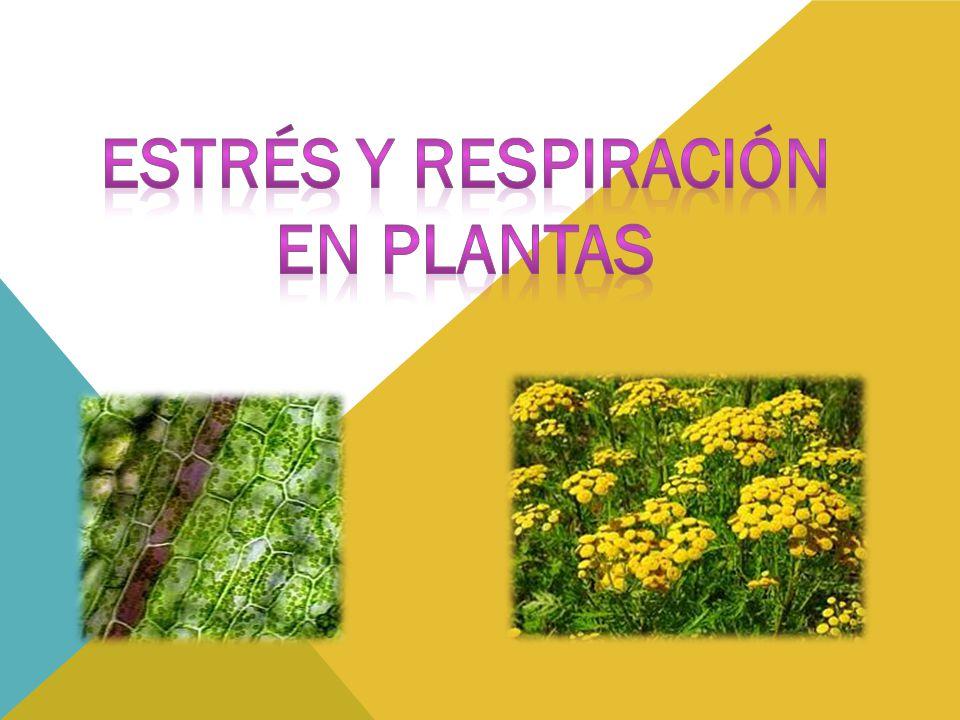 Estrés y respiración En plantas