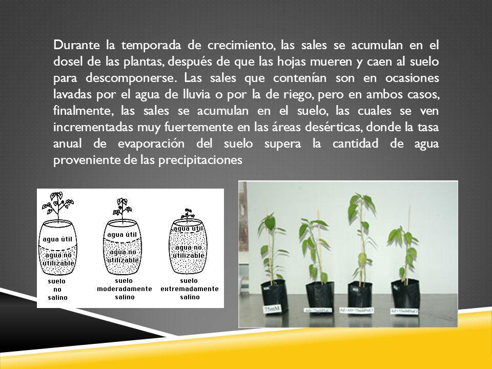 Durante la temporada de crecimiento, las sales se acumulan en el dosel de las plantas, después de que las hojas mueren y caen al suelo para descomponerse.
