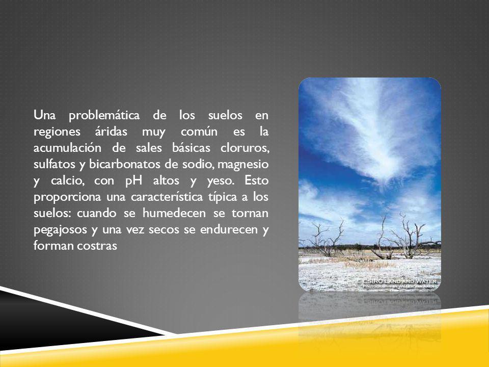 Una problemática de los suelos en regiones áridas muy común es la acumulación de sales básicas cloruros, sulfatos y bicarbonatos de sodio, magnesio y calcio, con pH altos y yeso.