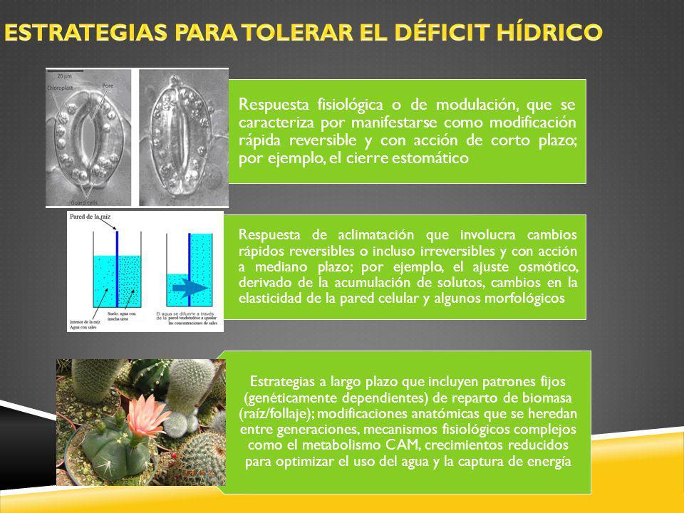 ESTRATEGIAS PARA TOLERAR EL DÉFICIT HÍDRICO