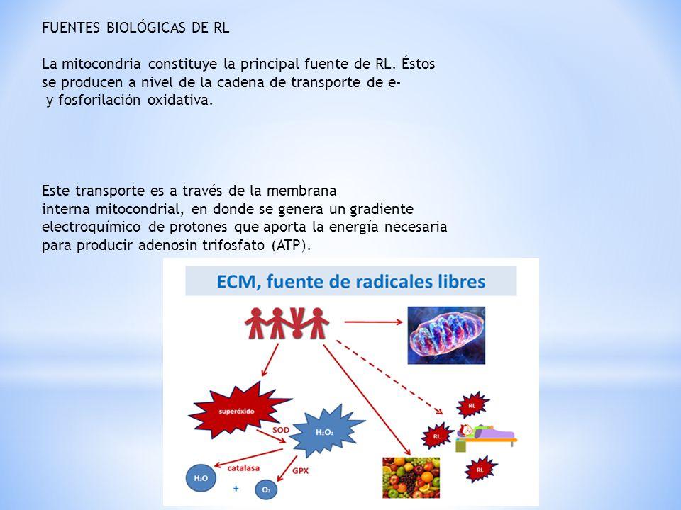 FUENTES BIOLÓGICAS DE RL