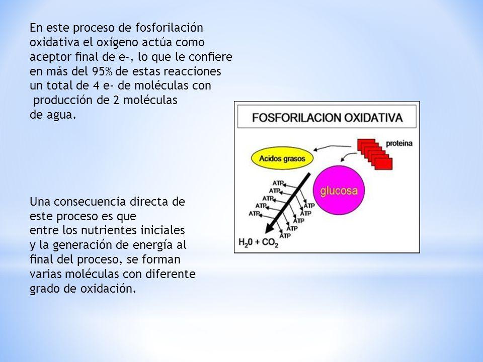 En este proceso de fosforilación