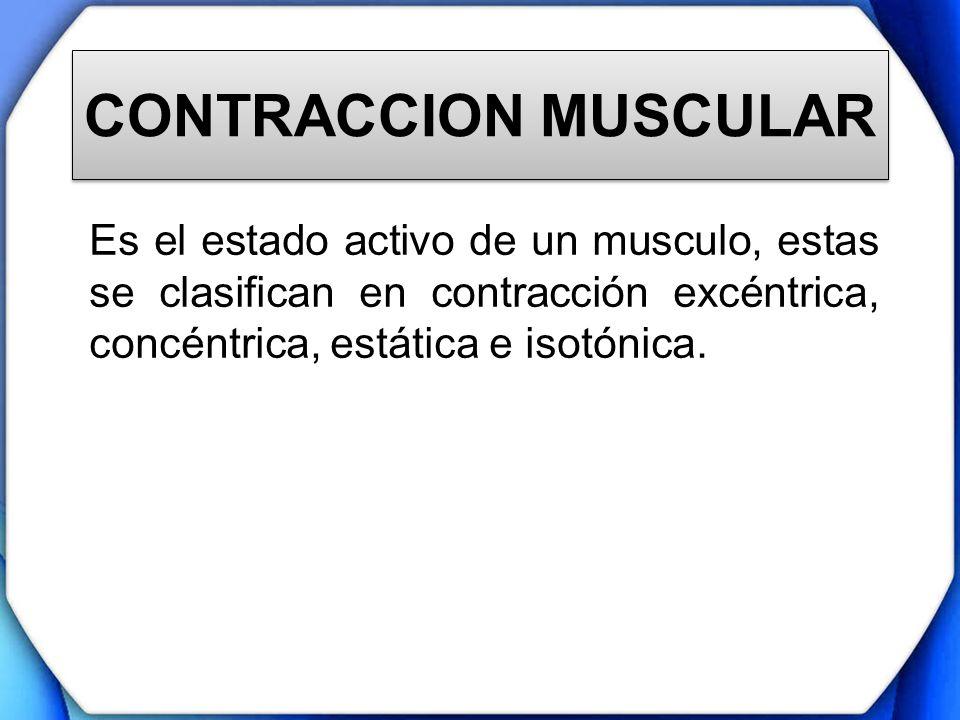 CONTRACCION MUSCULAR Es el estado activo de un musculo, estas se clasifican en contracción excéntrica, concéntrica, estática e isotónica.