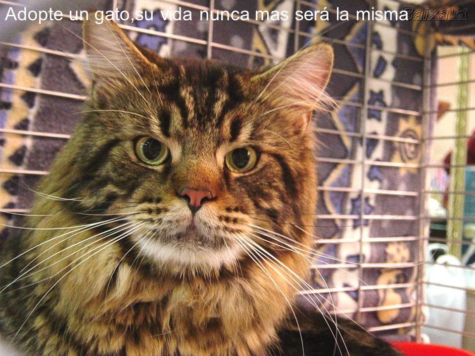 Adopte un gato,su vida nunca mas será la misma