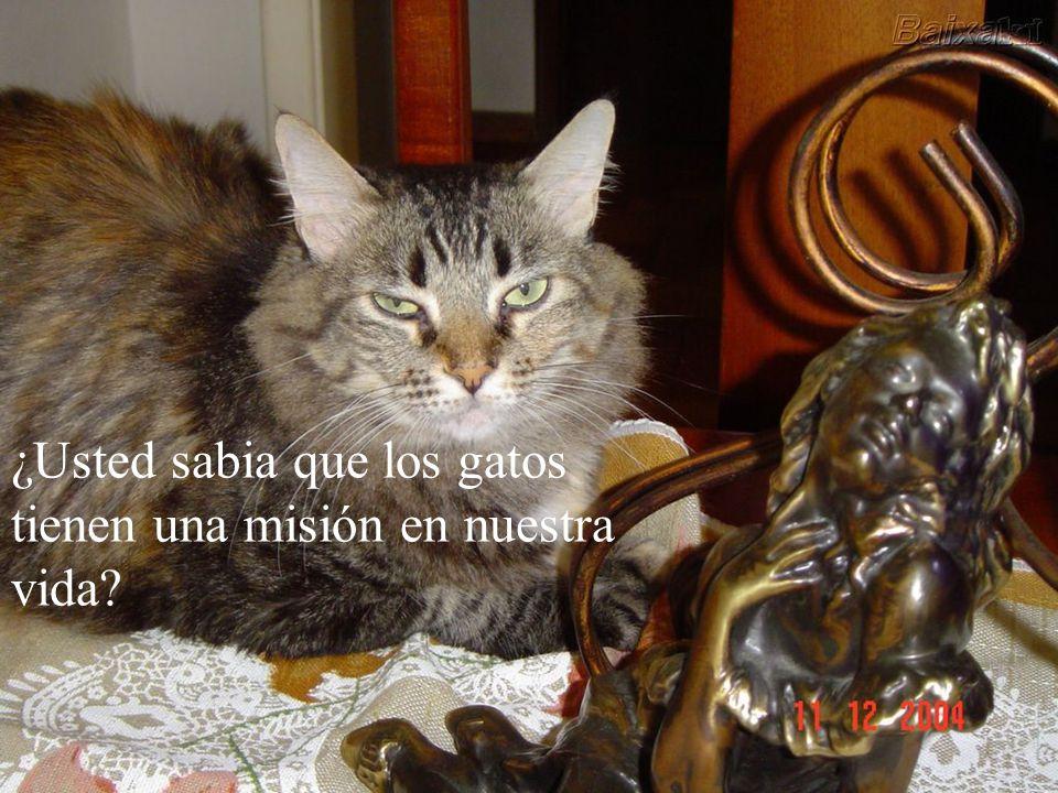 ¿Usted sabia que los gatos tienen una misión en nuestra vida
