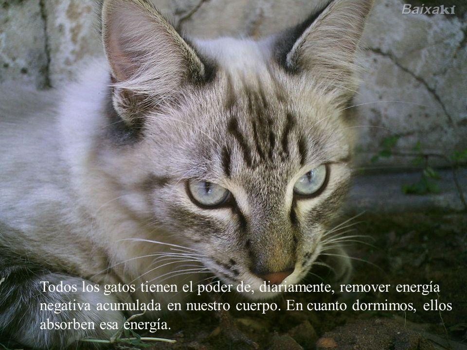 Todos los gatos tienen el poder de, diariamente, remover energía negativa acumulada en nuestro cuerpo.