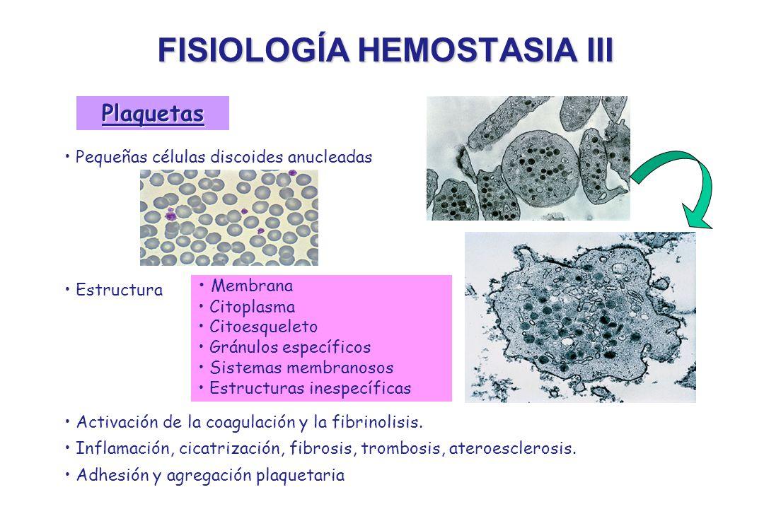 FISIOLOGÍA HEMOSTASIA III