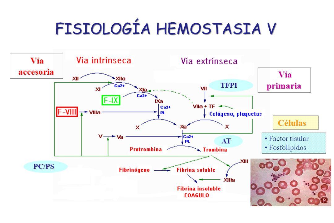FISIOLOGÍA HEMOSTASIA V
