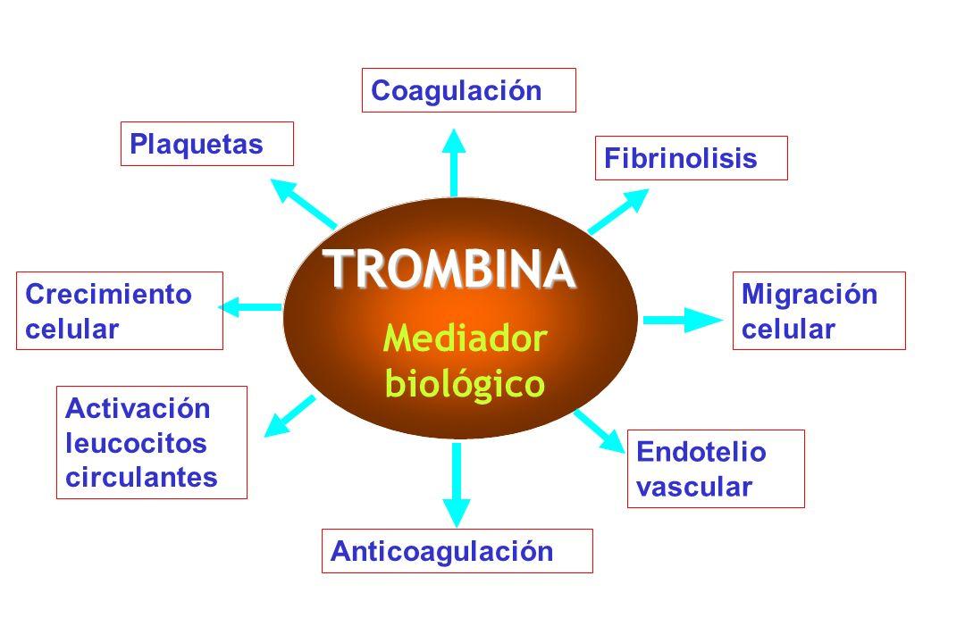 TROMBINA Mediador biológico Coagulación Plaquetas Fibrinolisis