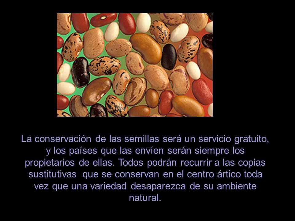 La conservación de las semillas será un servicio gratuito, y los países que las envíen serán siempre los propietarios de ellas.