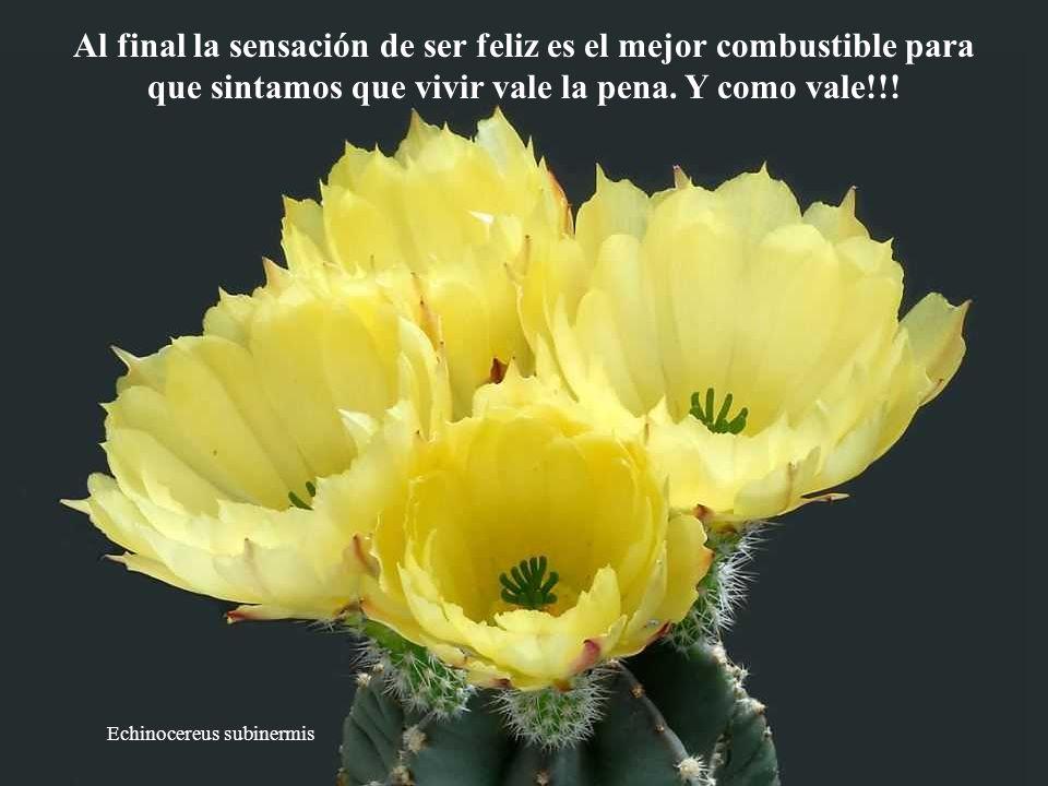Al final la sensación de ser feliz es el mejor combustible para que sintamos que vivir vale la pena. Y como vale!!!