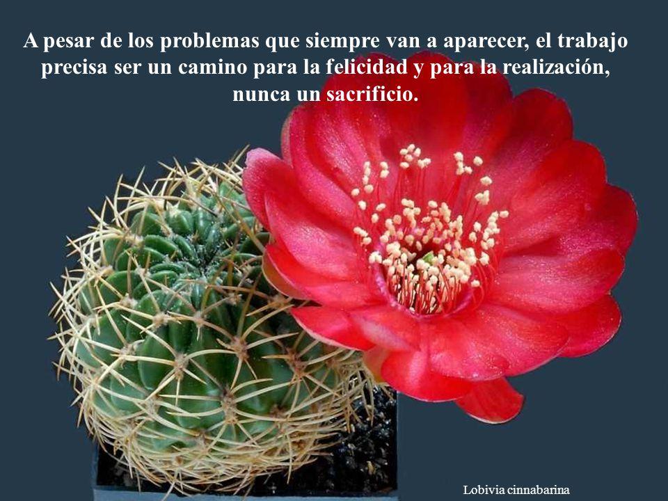 A pesar de los problemas que siempre van a aparecer, el trabajo precisa ser un camino para la felicidad y para la realización, nunca un sacrificio.