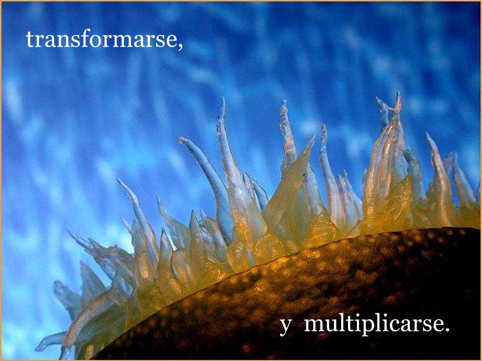 transformarse, y multiplicarse.