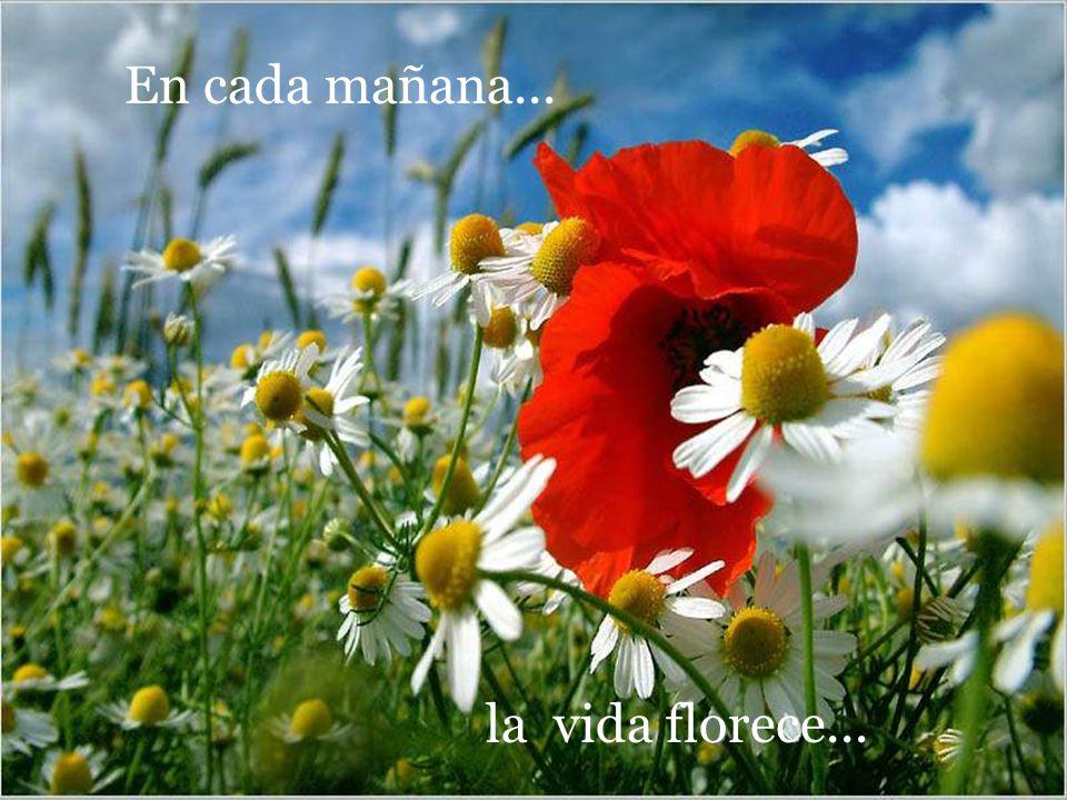 En cada mañana... la vida florece...