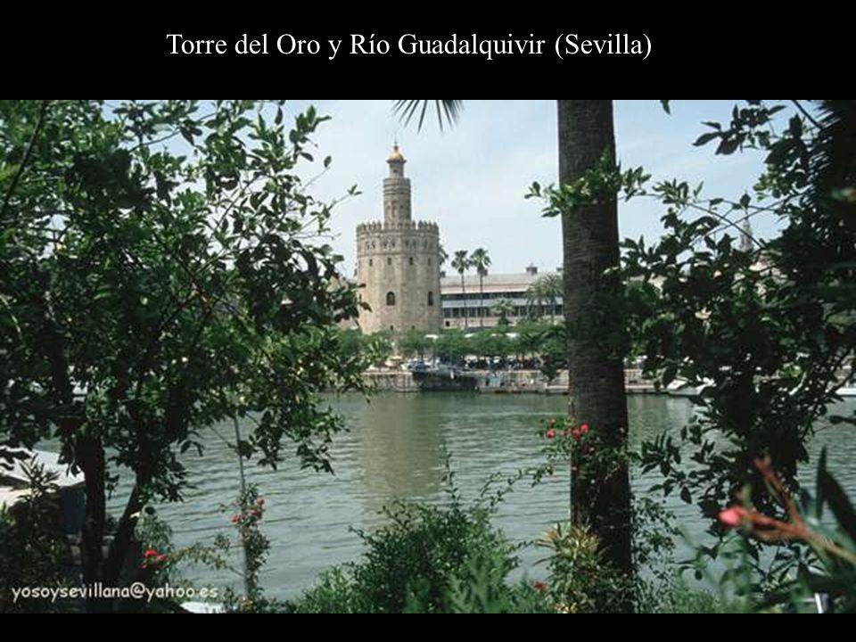 Torre del Oro y Río Guadalquivir (Sevilla)