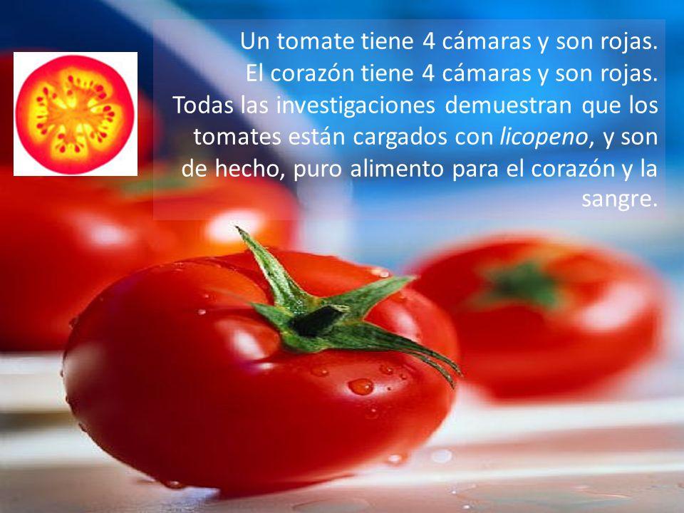 Un tomate tiene 4 cámaras y son rojas.