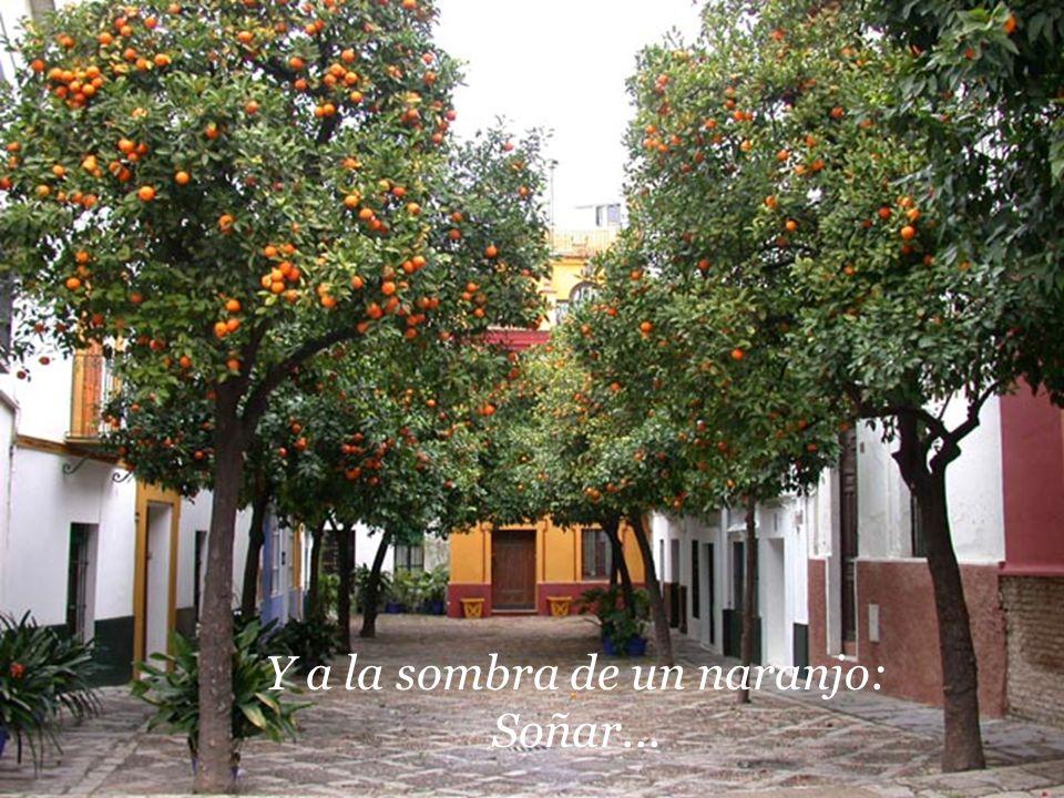 Y a la sombra de un naranjo: Soñar...