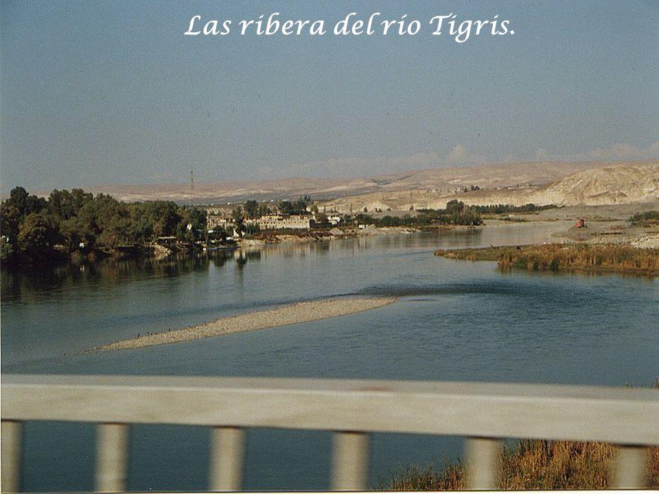 Las ribera del río Tigris.