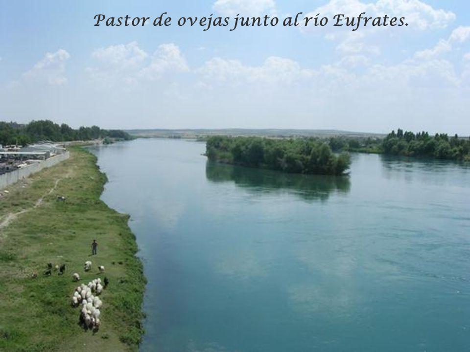 Pastor de ovejas junto al río Eufrates.