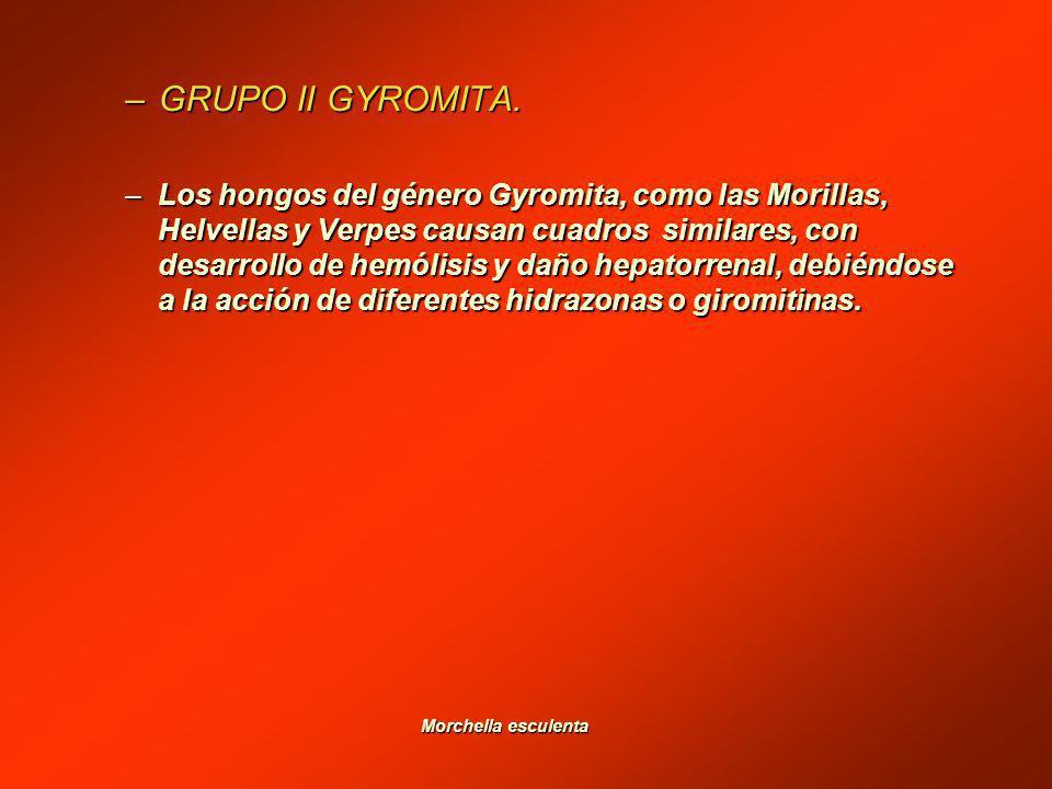 GRUPO II GYROMITA.