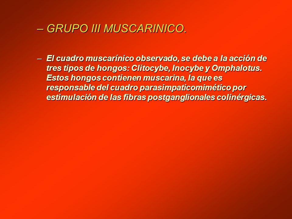 GRUPO III MUSCARINICO.