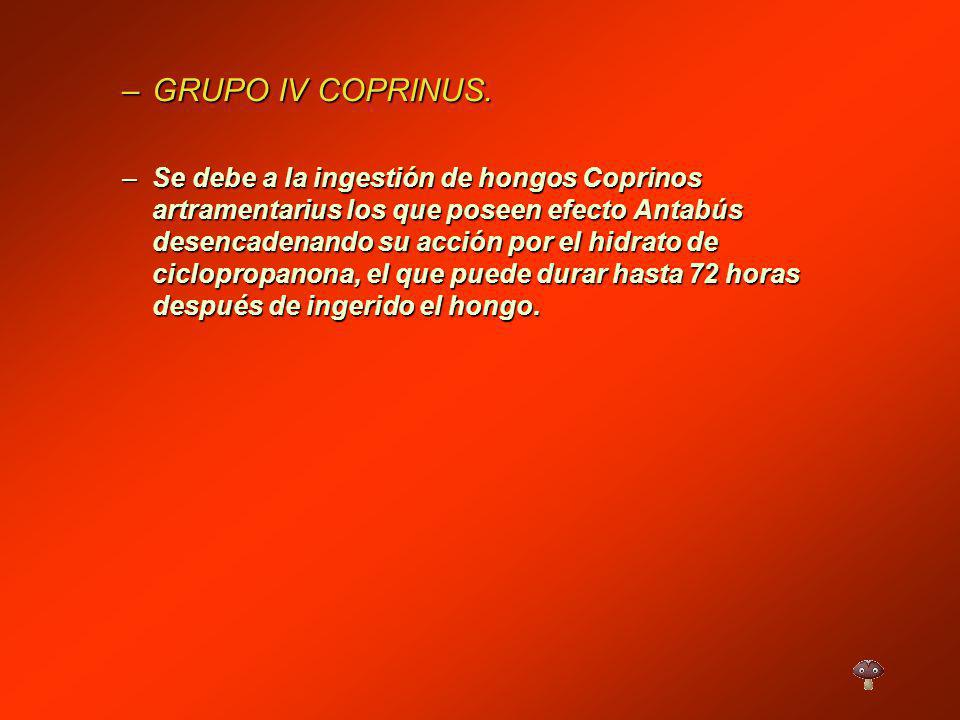 GRUPO IV COPRINUS.