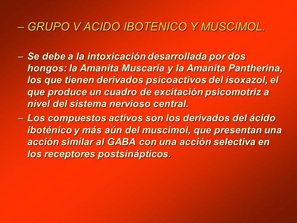 GRUPO V ACIDO IBOTENICO Y MUSCIMOL.