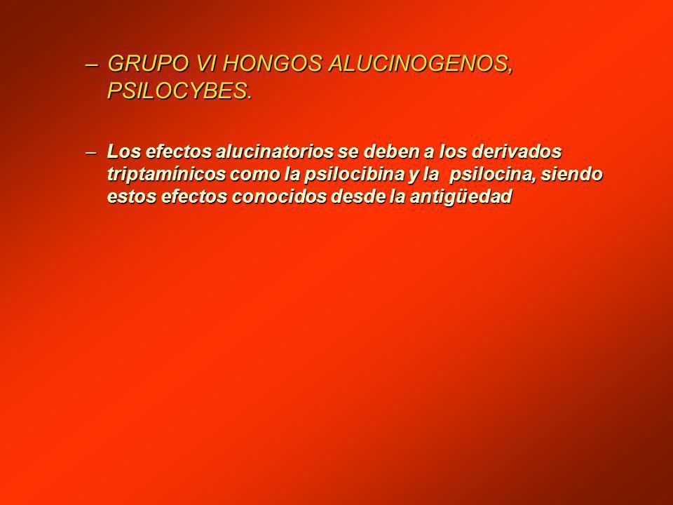 GRUPO VI HONGOS ALUCINOGENOS, PSILOCYBES.