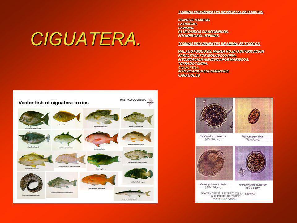 CIGUATERA. TOXINAS PROVENIENTES DE VEGETALES TOXICOS. HONGOS TOXICOS.