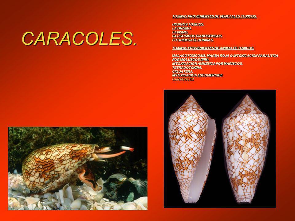 CARACOLES. TOXINAS PROVENIENTES DE VEGETALES TOXICOS. HONGOS TOXICOS.