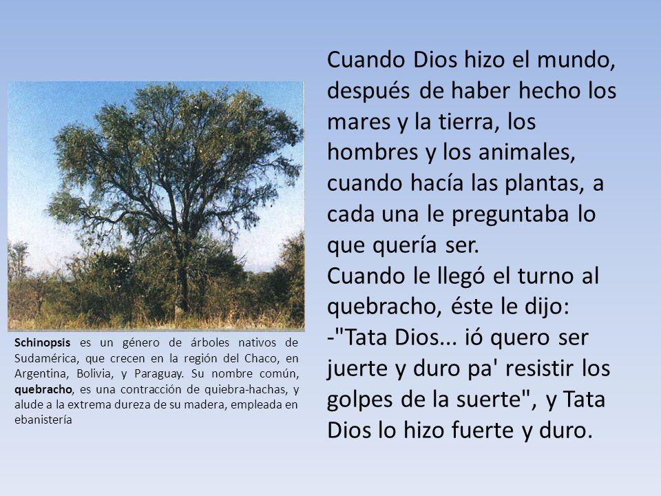 Cuando Dios hizo el mundo, después de haber hecho los mares y la tierra, los hombres y los animales, cuando hacía las plantas, a cada una le preguntaba lo que quería ser.