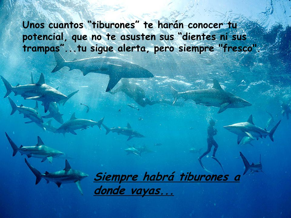 Siempre habrá tiburones a donde vayas...