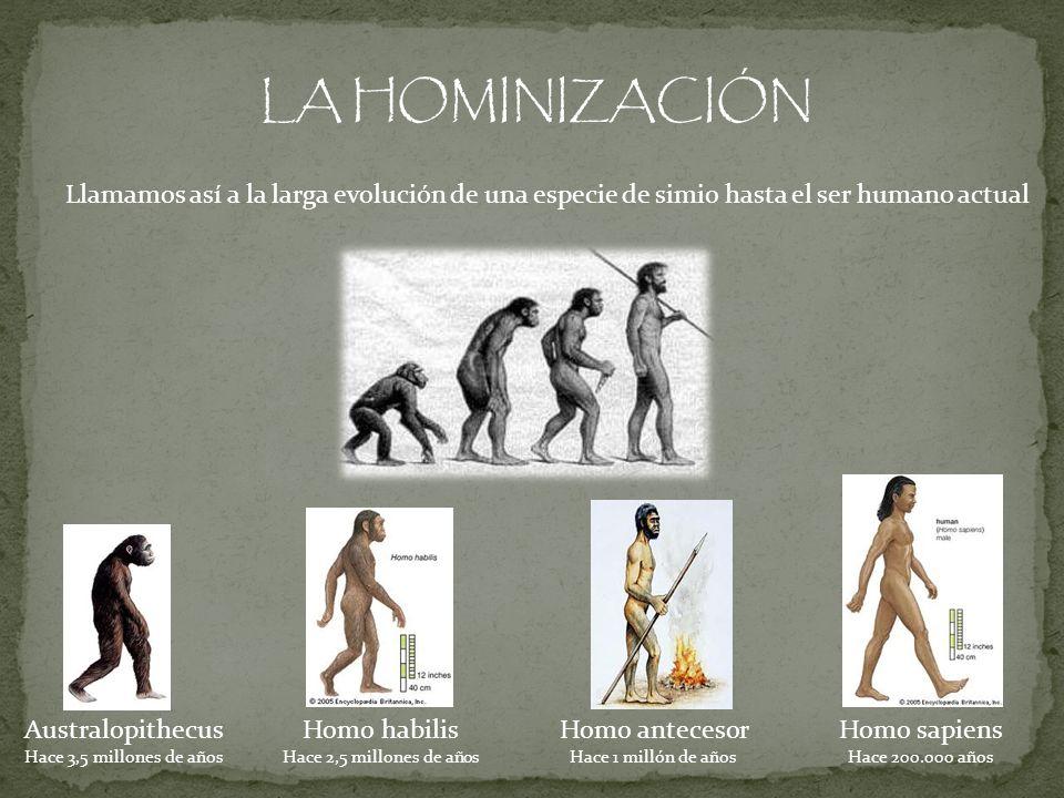 LA HOMINIZACIÓNLlamamos así a la larga evolución de una especie de simio hasta el ser humano actual.