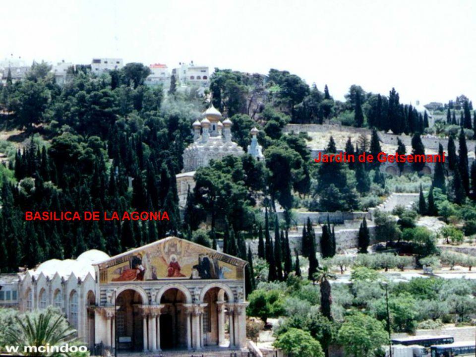Jardín de Getsemaní BASILICA DE LA AGONIA