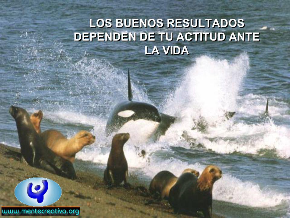 LOS BUENOS RESULTADOS DEPENDEN DE TU ACTITUD ANTE LA VIDA