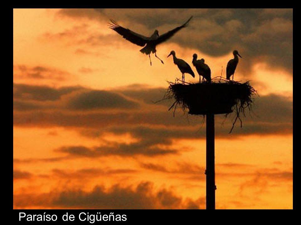 Paraíso de Cigüeñas