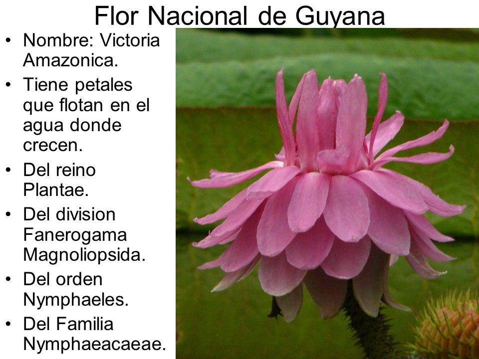Flor Nacional de Guyana