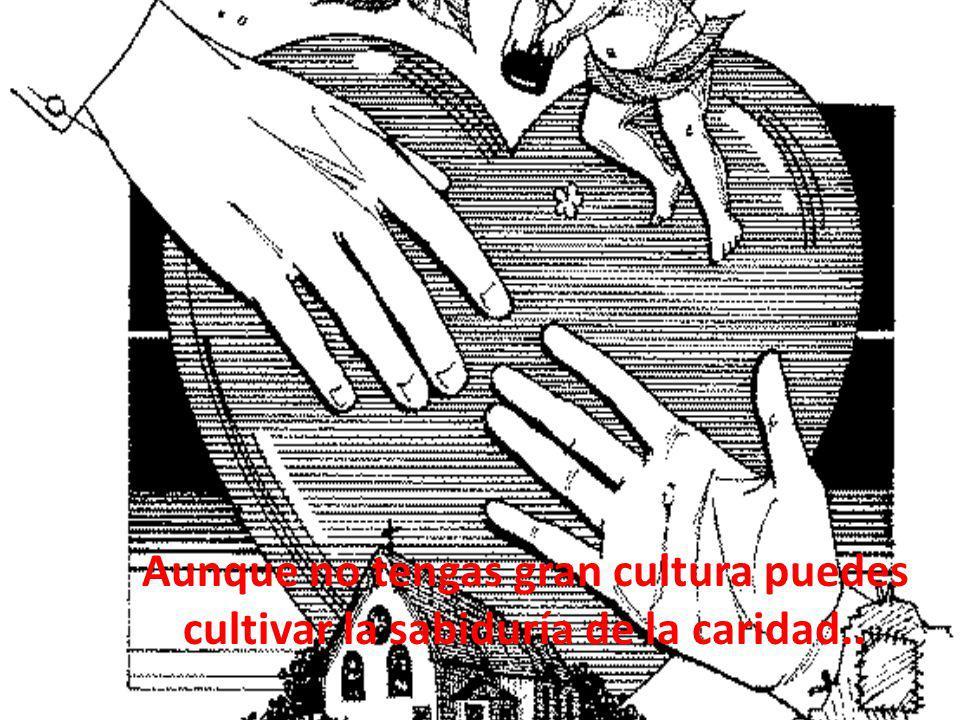 Aunque no tengas gran cultura puedes cultivar la sabiduría de la caridad..