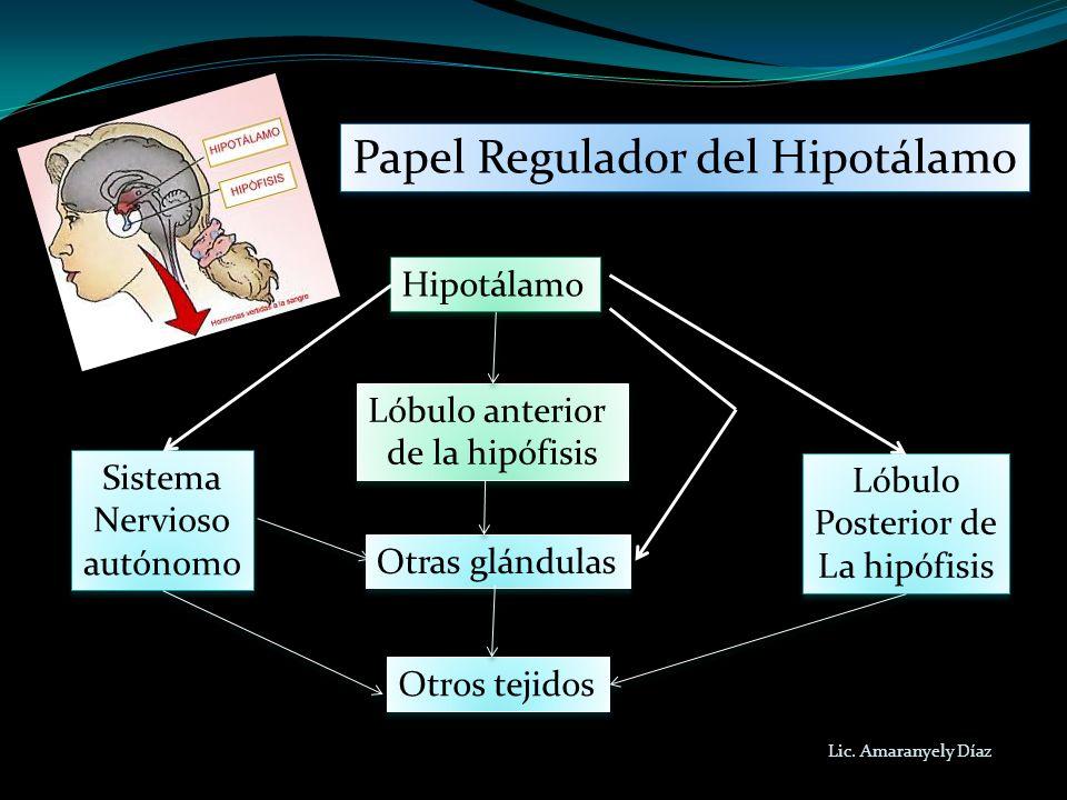 Papel Regulador del Hipotálamo