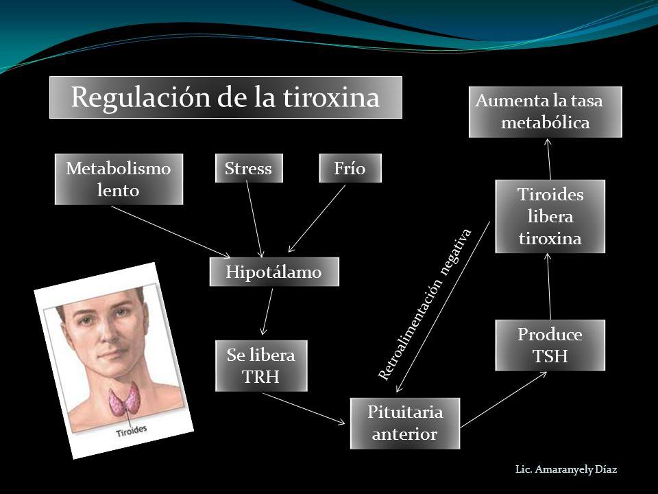 Regulación de la tiroxina