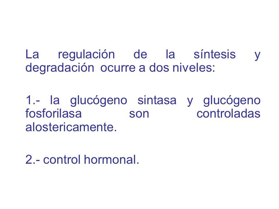 La regulación de la síntesis y degradación ocurre a dos niveles: