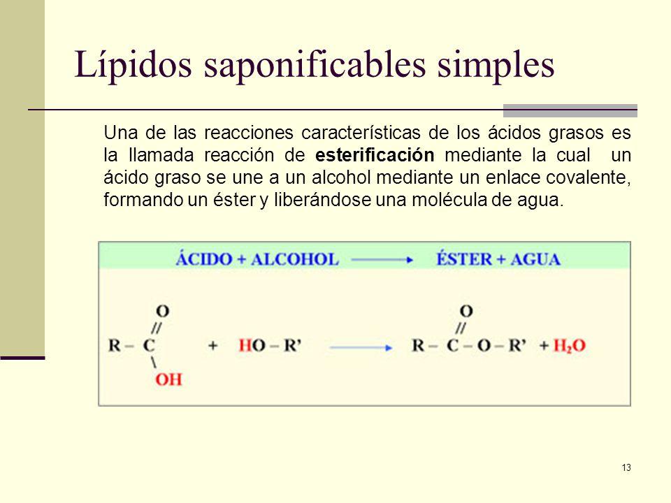 Lípidos saponificables simples
