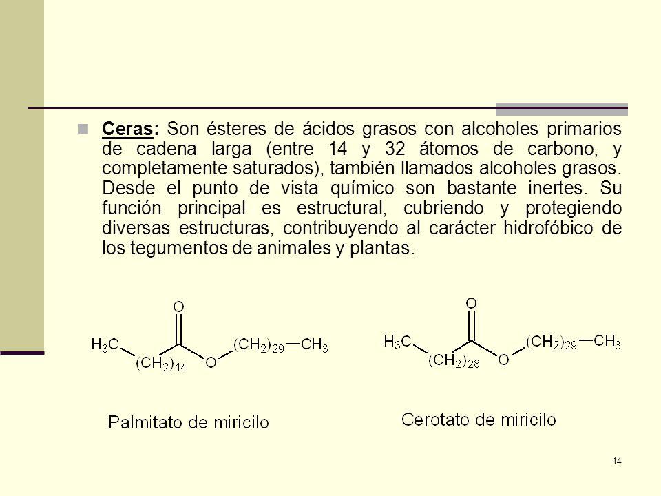 Ceras: Son ésteres de ácidos grasos con alcoholes primarios de cadena larga (entre 14 y 32 átomos de carbono, y completamente saturados), también llamados alcoholes grasos.