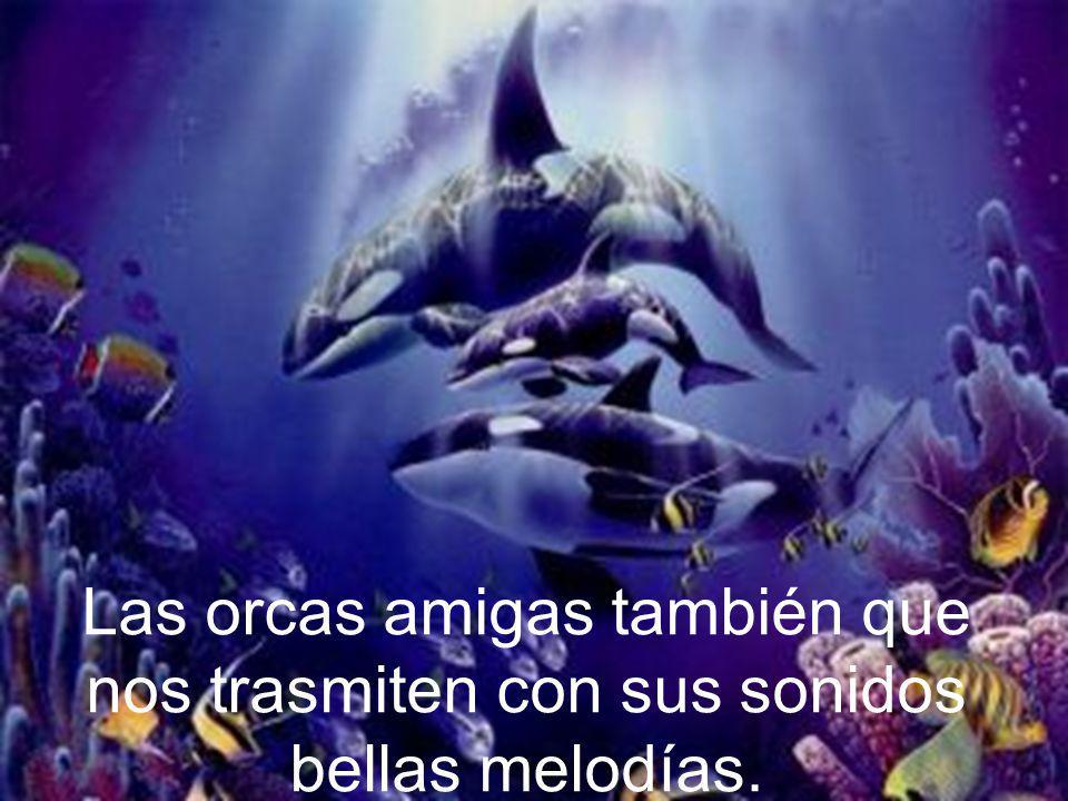 Las orcas amigas también que nos trasmiten con sus sonidos bellas melodías.