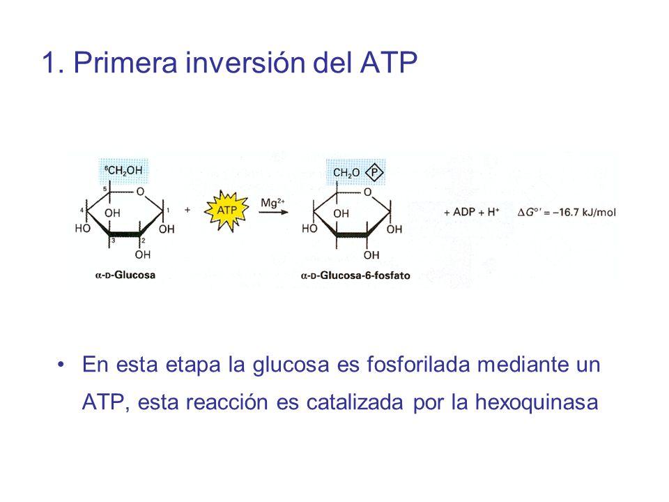 1. Primera inversión del ATP